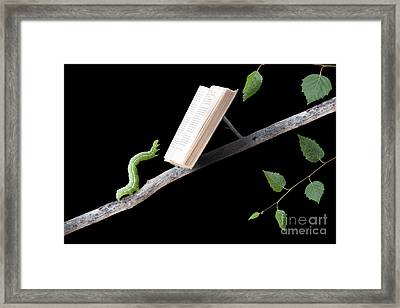 Book Worm Framed Print by Cindy Singleton