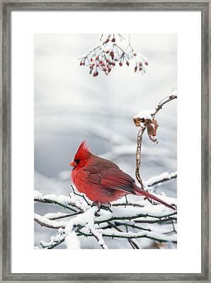 Bookend Cardnal Male Vertical Framed Print