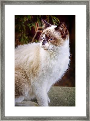 Bookend Kitty II Framed Print by LeeAnn McLaneGoetz McLaneGoetzStudioLLCcom