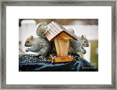 Bookends At The Feeder Framed Print by Jim  Calarese