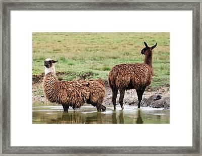 Bookends Framed Print by Teresa Blanton