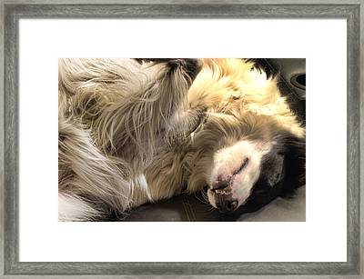 Boo's Nighttime Sunbath Framed Print