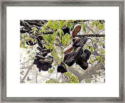 Boot Tree At Neels Gap Framed Print