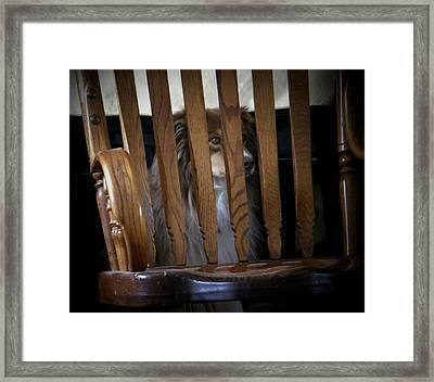 Bootsie Framed Print by Lenore Senior