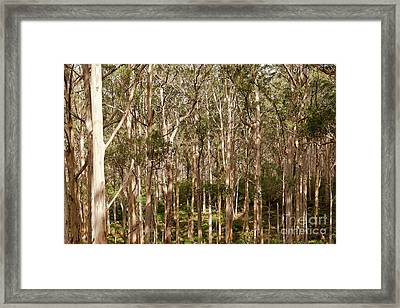Framed Print featuring the photograph Boranup Forest  by Ivy Ho