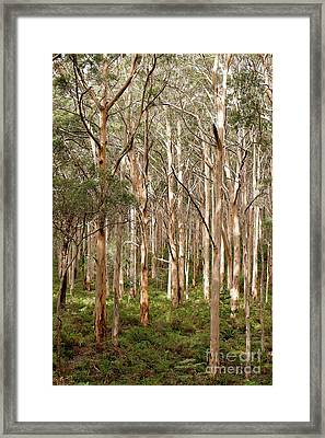 Framed Print featuring the photograph Boranup Forest Portrait by Ivy Ho