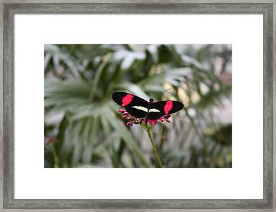 Borboleta Butterfly Framed Print
