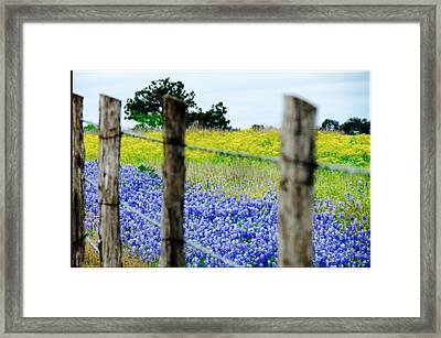 Border Blue Framed Print by David  Norman