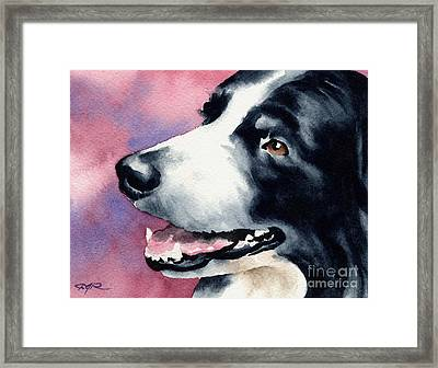 Border Collie Framed Print by David Rogers