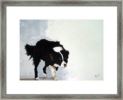 Border Collie Framed Print by Dick Larsen