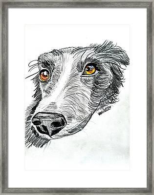 Border Collie Dog Colored Pencil Framed Print