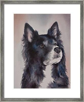 Border Collie Dog Framed Print
