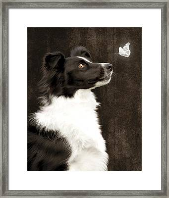 Border Collie Dog Watching Butterfly Framed Print