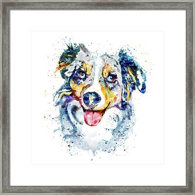 Border Collie  Framed Print by Marian Voicu
