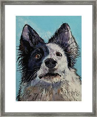 Border Collie Portrait Framed Print