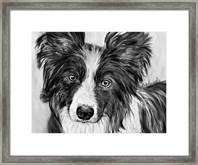 Border Collie Stare Framed Print
