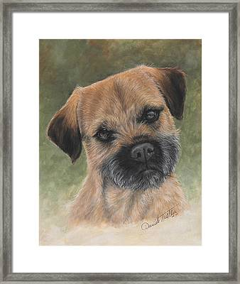 Border Terrier Portrait Framed Print by Daniele Trottier