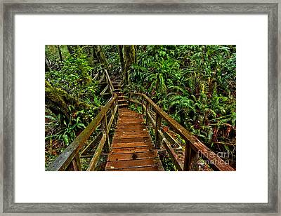 Bordwalk Through The Ferns Framed Print by Adam Jewell