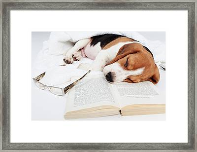 Boring Book  Framed Print by Floriana Barbu