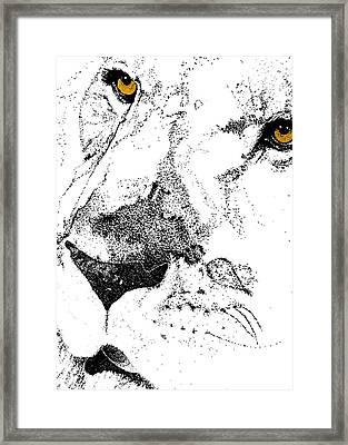 Born Free Art Framed Print by JAMART Photography