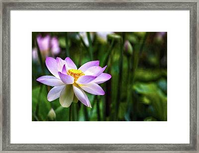 Framed Print featuring the photograph Born Of The Water by Edward Kreis