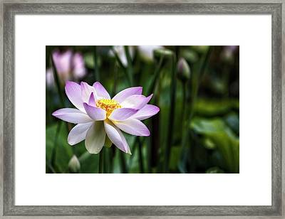 Framed Print featuring the photograph Born Of The Water Original by Edward Kreis