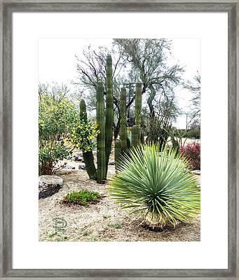 Borrego Botanical Garden Framed Print