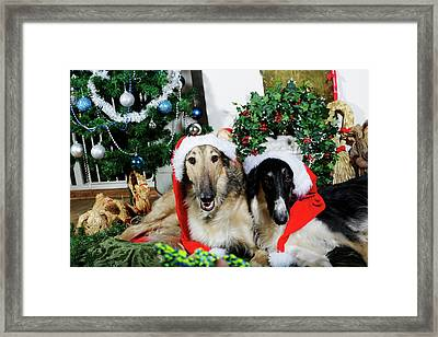 Borzoi Puppies Wishing A Merry Christmas Framed Print by Christian Lagereek