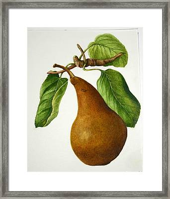 Framed Print featuring the painting Bosc Pear by Margit Sampogna