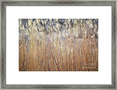 Framed Print featuring the photograph Bosque Desert Willows by Andrea Hazel Ihlefeld