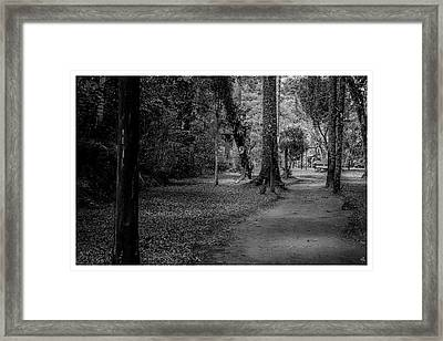 Bosque Do Silencio-campos Do Jordao-sp Framed Print
