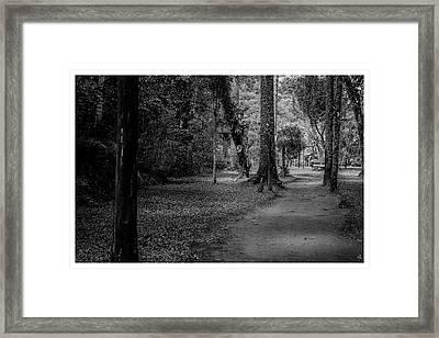Bosque Do Silencio-campos Do Jordao-sp Framed Print