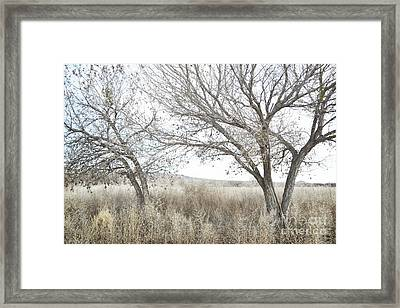 Framed Print featuring the photograph Bosque Dreamy Tree Field by Andrea Hazel Ihlefeld