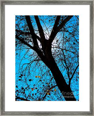 Bosque Silhouette Framed Print