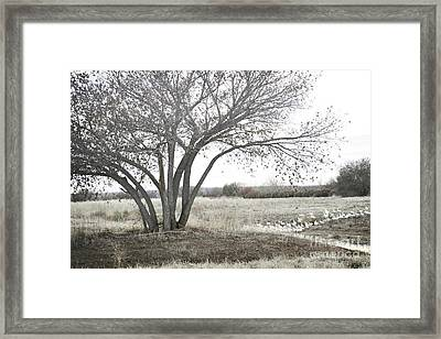 Framed Print featuring the photograph Bosque Tree Snow Geese by Andrea Hazel Ihlefeld