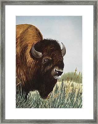 Boss Bull Framed Print by Bud Bullivant