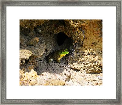 Framed Print featuring the photograph Boss Frog by Al Powell Photography USA