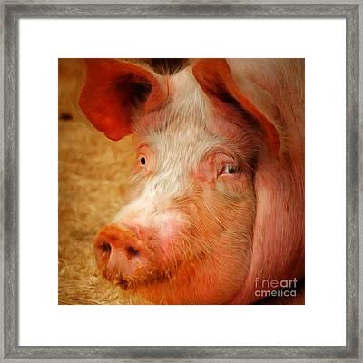 Boss Hog Painterly 20170922 Square Framed Print