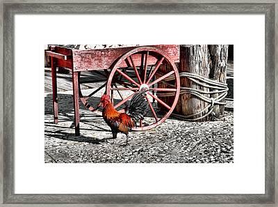 Bossman Framed Print by JAMART Photography