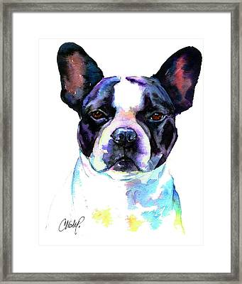 Boston Bulldog Portrait Framed Print