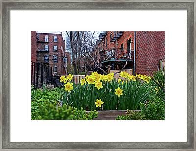 Boston Ma South End Daffodils Framed Print
