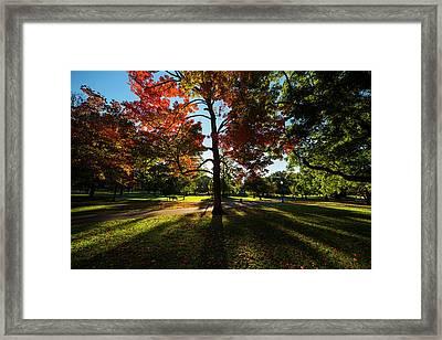 Boston Public Garden Autumn Tree Morning Light Framed Print