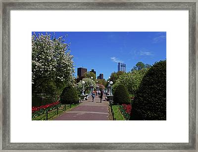 Boston Public Garden Spring Tree Bridge Boston Ma Framed Print