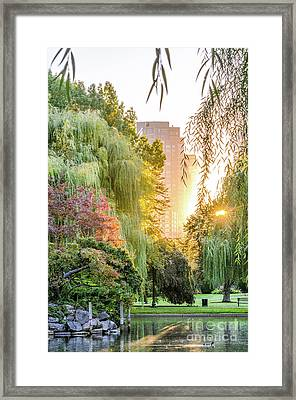 Boston Public Garden Sunrise Framed Print