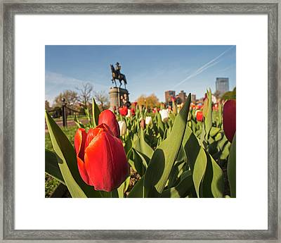 Boston Public Garden Tulips And George Washington Statue 2 Framed Print
