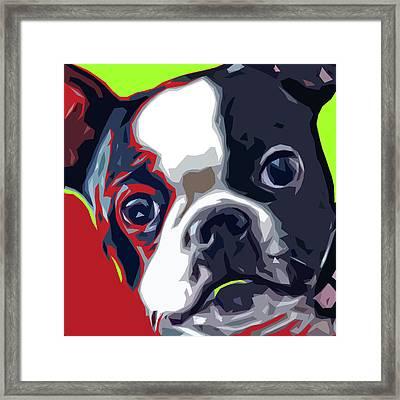Boston Pup Framed Print