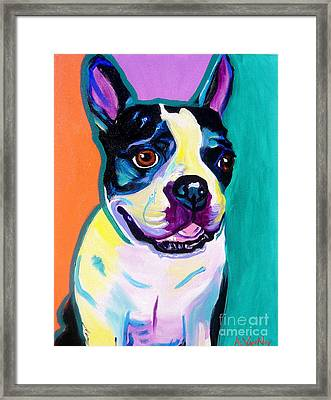 Boston Terrier - Jack Boston Framed Print by Alicia VanNoy Call