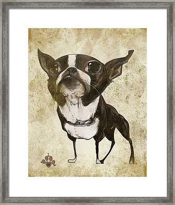 Boston Terrier - Antique Framed Print