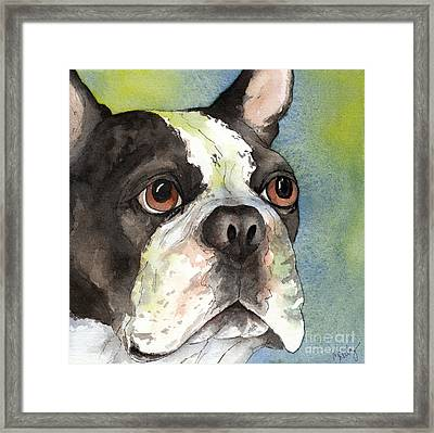 Boston Terrier Close Up Framed Print by Cherilynn Wood