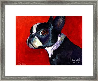 Boston Terrier Dog Portrait 2 Framed Print by Svetlana Novikova